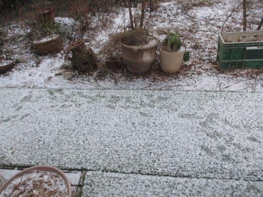 ショボい雪       1月24日(木)_d0127634_09313463.jpg