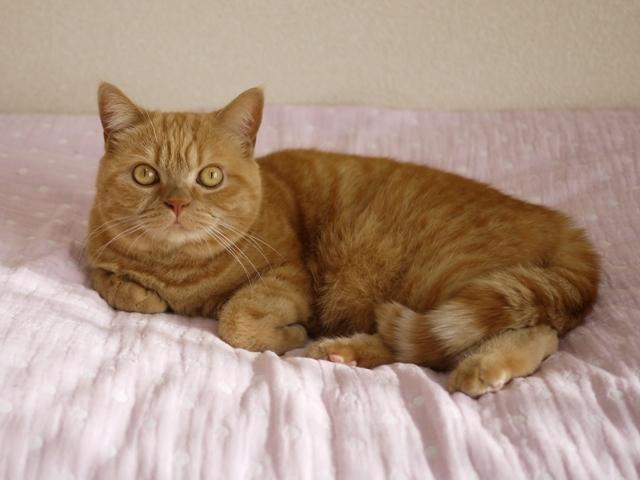 猫のお留守番 みかんちゃん編。_a0143140_22053010.jpg