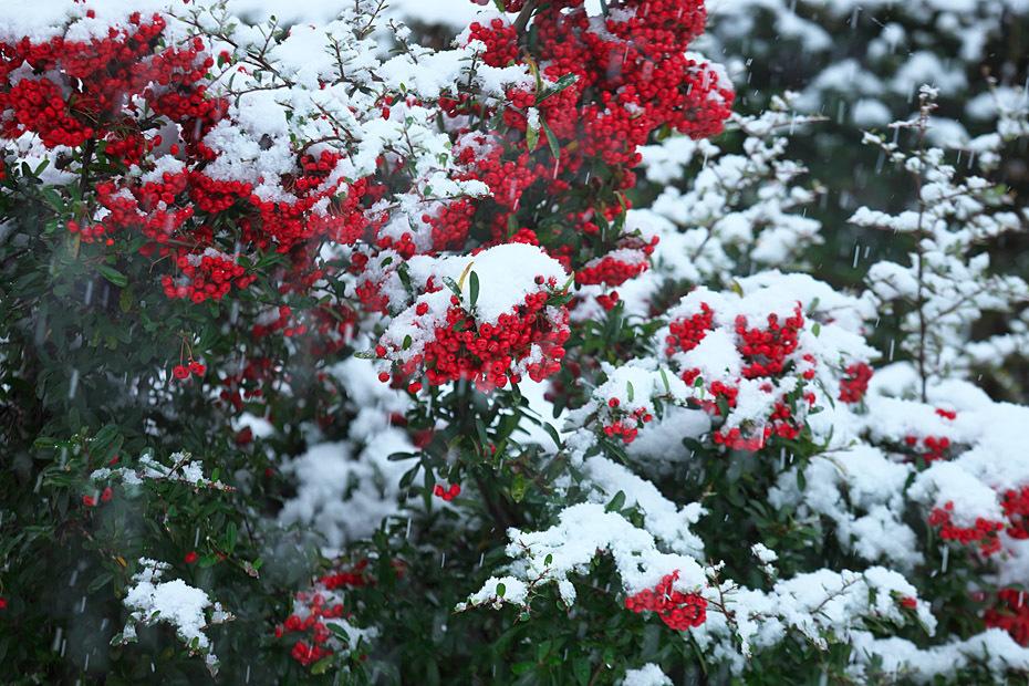 雪の我が家_c0067040_19245083.jpg