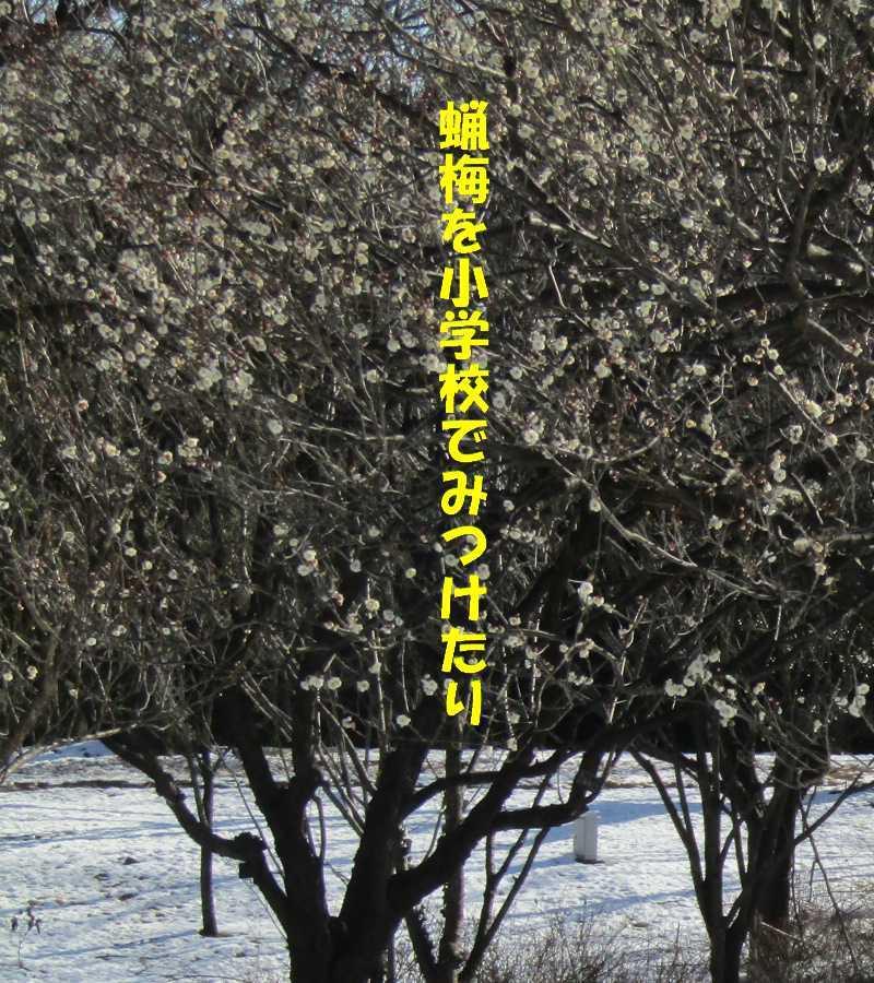 f0117041_05553164.jpg