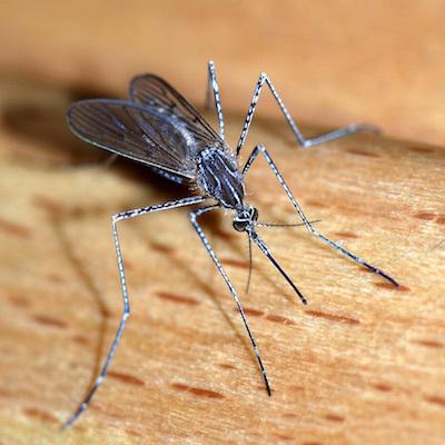蚊の十戒_c0109850_04065321.jpg