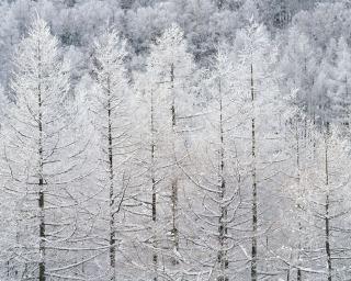暴風雪_f0118184_11445388.jpg