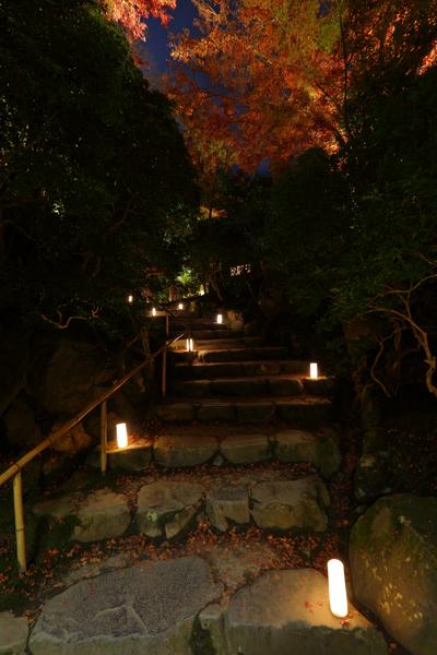 瑠璃光院ライトアップ_e0051888_23115917.jpg
