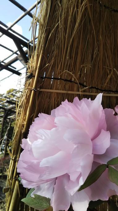 春の兆し_b0324291_00112016.jpg