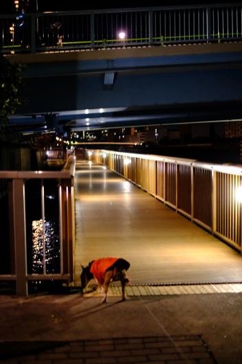 夜のお散歩_b0310424_12164692.jpg