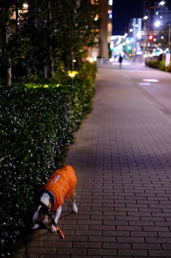 夜のお散歩_b0310424_12164743.jpg