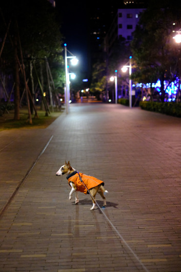 夜のお散歩_b0310424_12164981.jpg