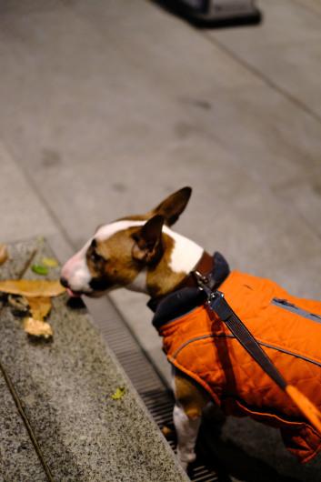 夜のお散歩_b0310424_12165026.jpg