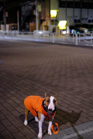 夜のお散歩_b0310424_12165072.jpg