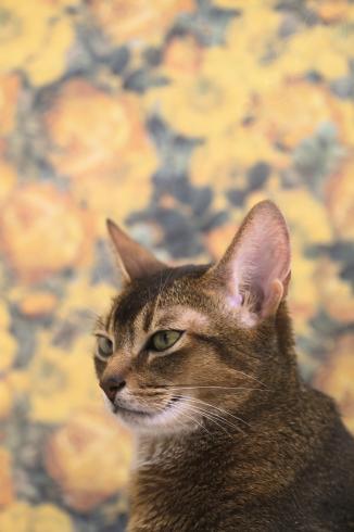 [猫的]写真のウソ_e0090124_23591850.jpg