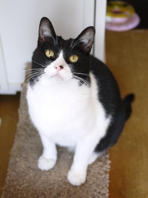 猫のお留守番 ピケちゃん編。_a0143140_21041497.jpg