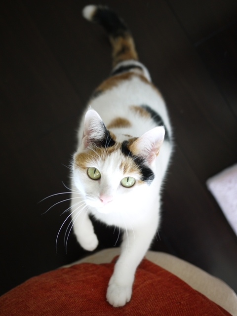 猫のお留守番 エンジェルちゃん編。_a0143140_21062131.jpg