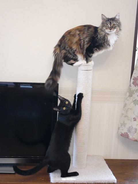 猫のお留守番 〇くんAoiちゃん編。_a0143140_21414404.jpg