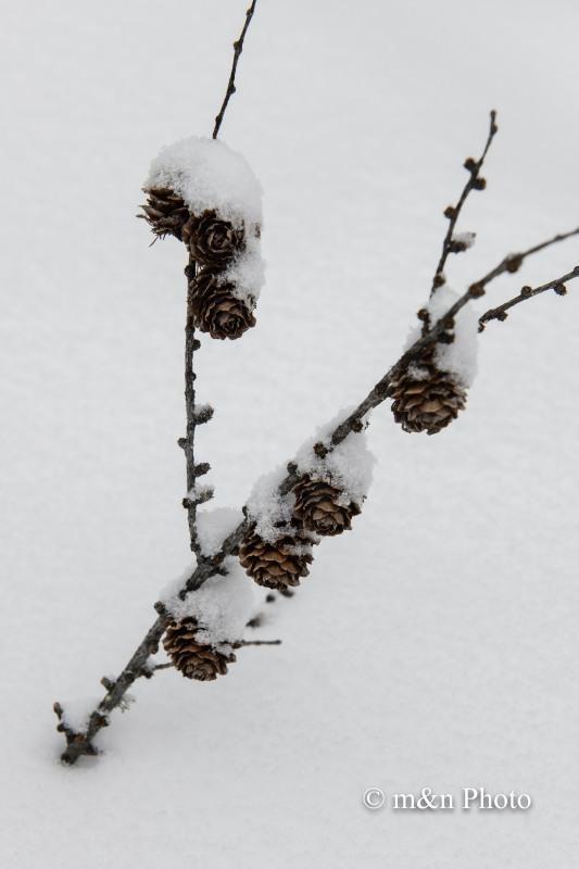 雪帽子_e0321360_01321497.jpg