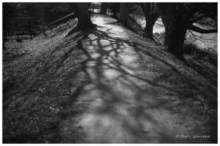 冬の散歩道_b0246079_21400240.jpg
