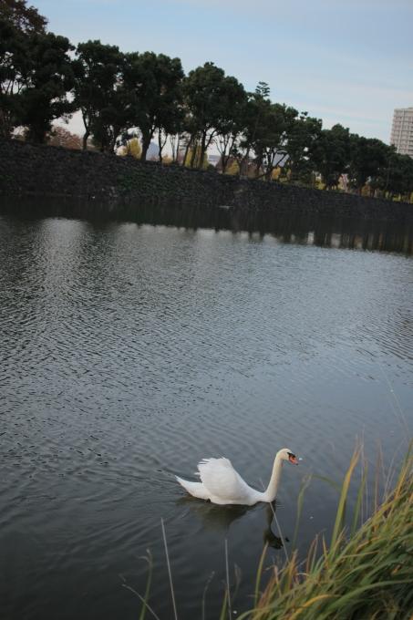 街の白鳥_b0324291_20283832.jpg