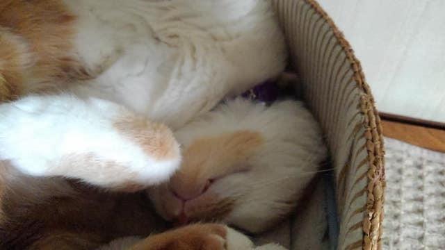 【猫】ヌクヌクっす_f0141609_23042422.jpg