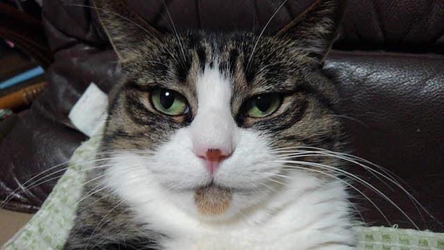 【猫】ヌクヌクっす_f0141609_23042476.jpg