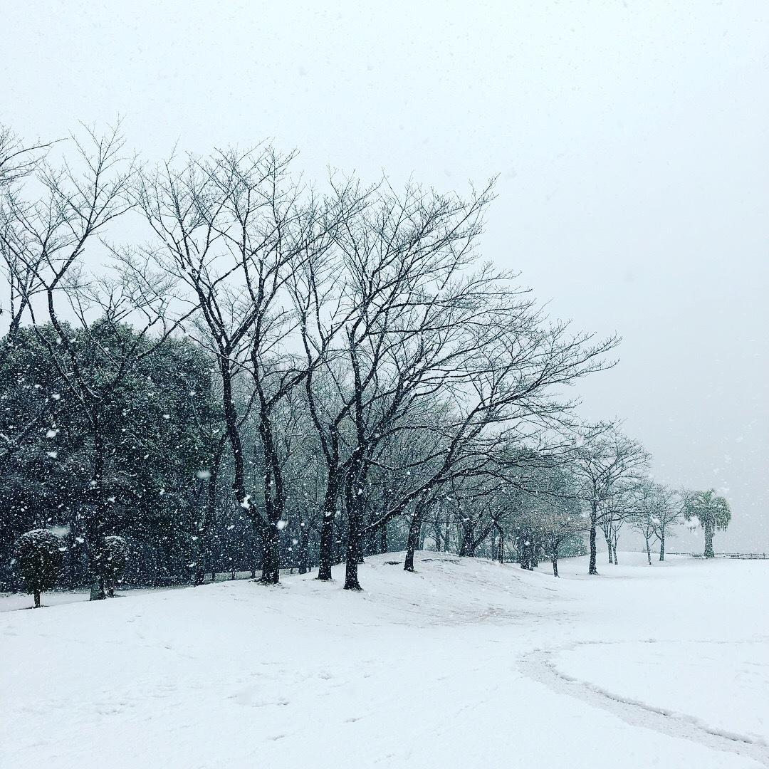 雪の土曜日_b0072234_15425714.jpeg