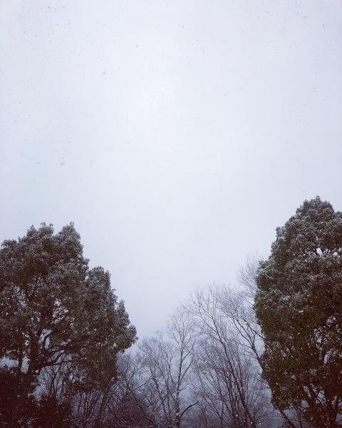 雪の土曜日_b0072234_15481678.jpeg