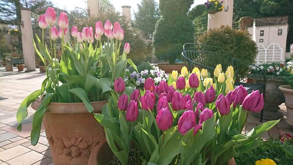フラリエの花散歩に参加しました!_f0373339_23373553.jpg