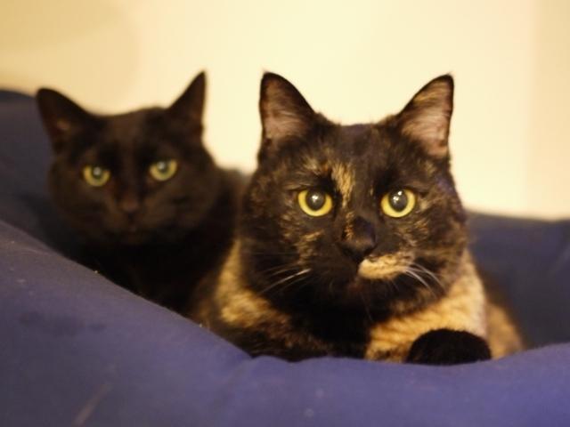 猫のお留守番 りんちゃんペコちゃん編。_a0143140_23495658.jpg