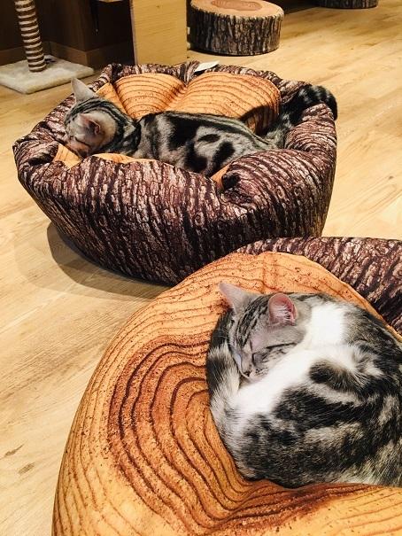 娘たちと猫カフェへ_d0327373_09572974.jpg