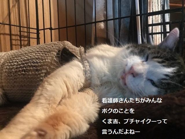 くま吉くんの手術予定日_f0242002_21503736.jpg