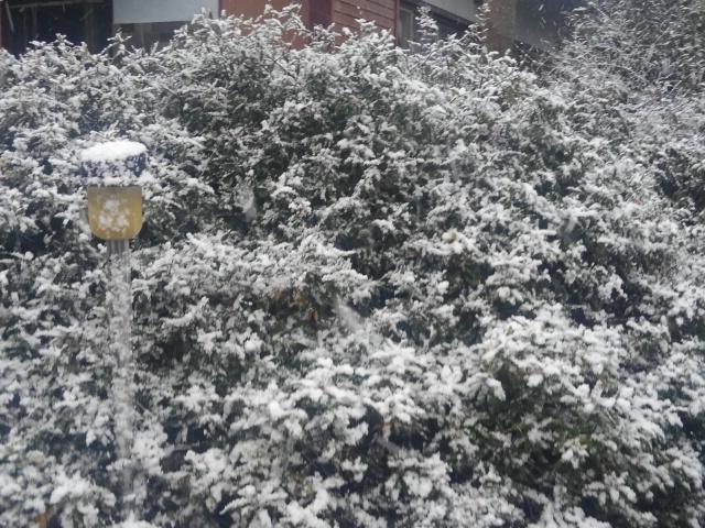 『vol.3703 2019年初雪』_e0040714_01175713.jpg