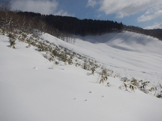 Itoshiro backcountry paradise !!_c0359615_20024365.jpg