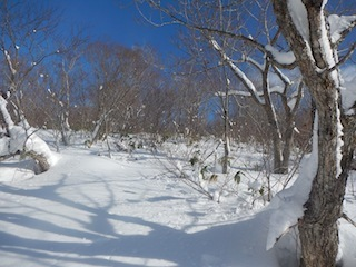 Itoshiro backcountry paradise !!_c0359615_20025039.jpg