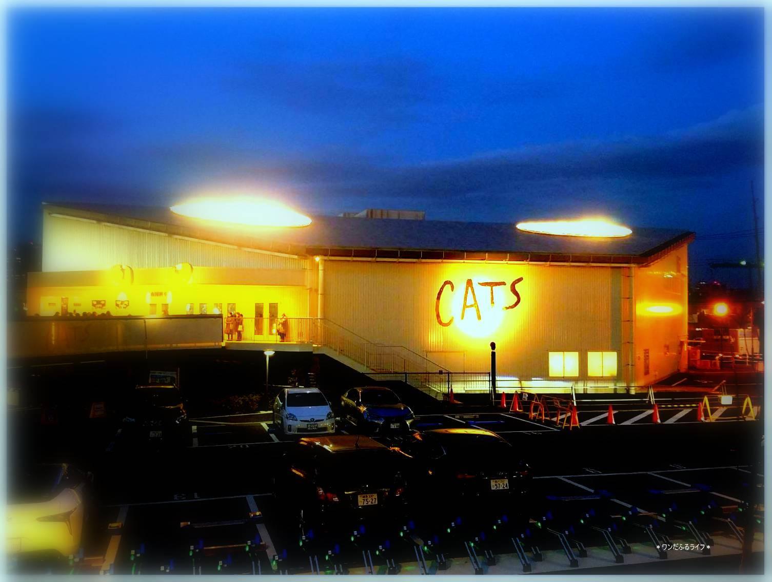 DOGSではなく『CATS』_d0317115_14274268.jpg