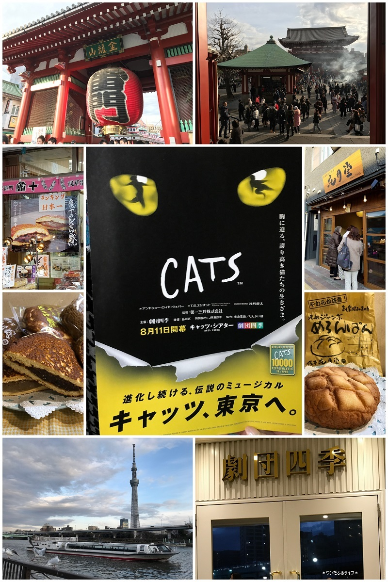 DOGSではなく『CATS』_d0317115_14275290.jpg