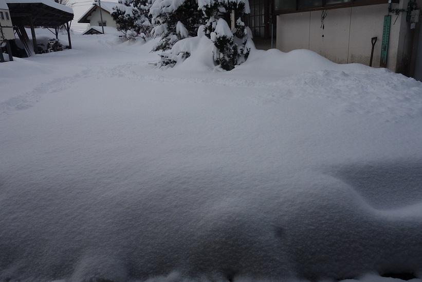 雪が降りました_e0112417_22302787.jpg