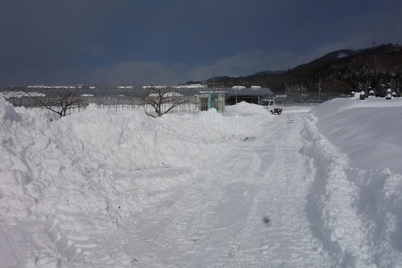 雪が降りました_e0112417_22313169.jpg
