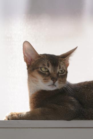 [猫的]睨み_e0090124_22044176.jpg