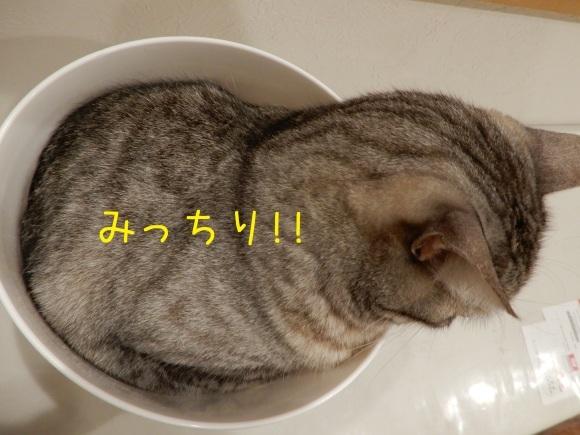 カップねこ_c0259945_12345502.jpg