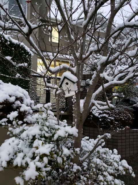 0℃ ⛄ 雪の朝「どうなる?どうする?川西病院」東谷公民館10時から 🕔_f0061067_725118.jpg