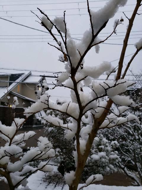 0℃ ⛄ 雪の朝「どうなる?どうする?川西病院」東谷公民館10時から 🕔_f0061067_7251184.jpg