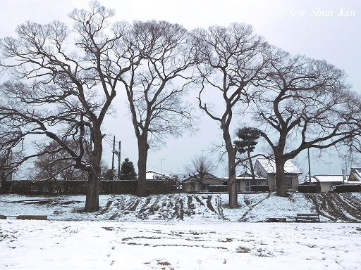雪景色 2019年1月27日_a0164068_23253073.jpg