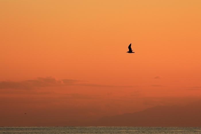 江の島チューリップ_f0115475_10481397.jpg