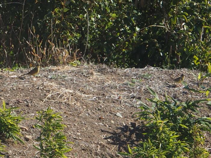 リビング DE 鳥見。_c0197578_17512032.jpg