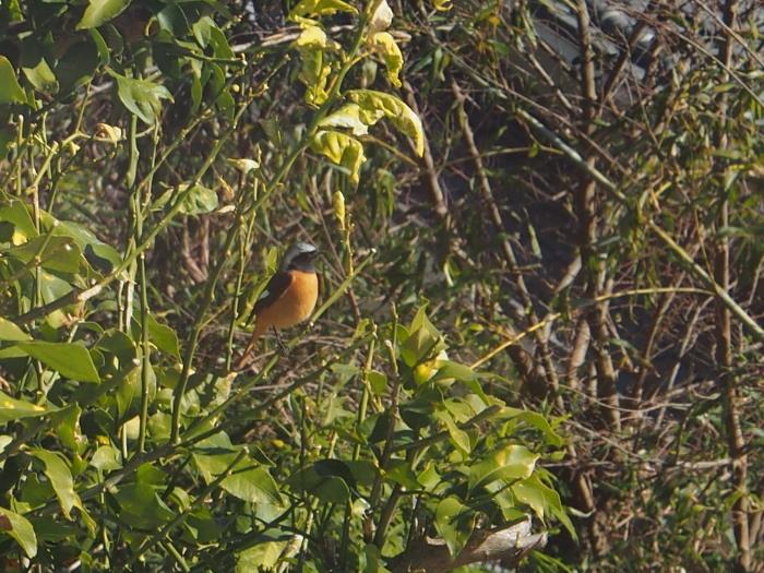 リビング DE 鳥見。_c0197578_17513668.jpg