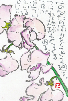 スイートピー・春が近づいているらしい_a0030594_20501306.jpg