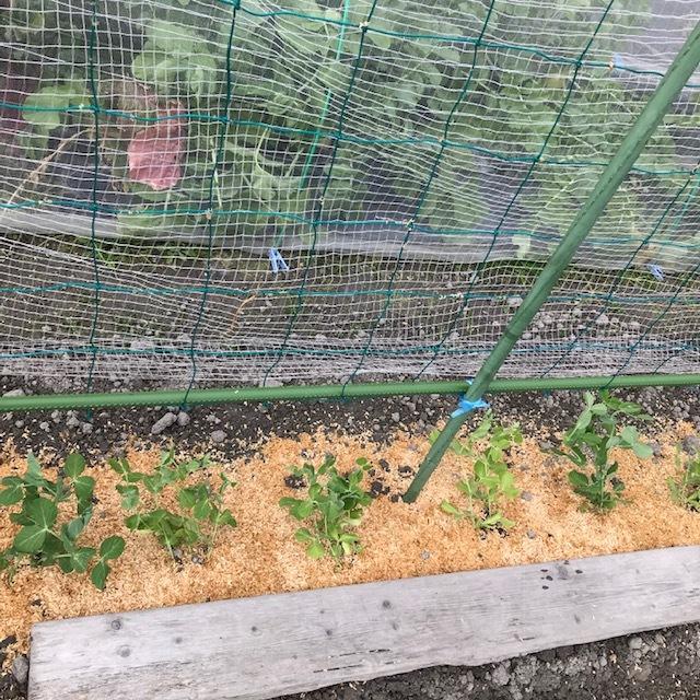 今日の収穫_f0204295_14225687.jpg