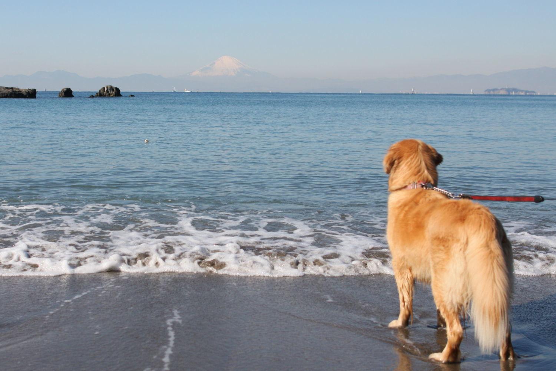 冬の葉山の海♪_b0275998_12395604.jpg