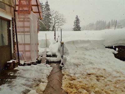 暖冬の積雪深を測ってみました_c0336902_18132791.jpg