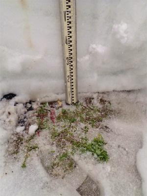 暖冬の積雪深を測ってみました_c0336902_18133392.jpg