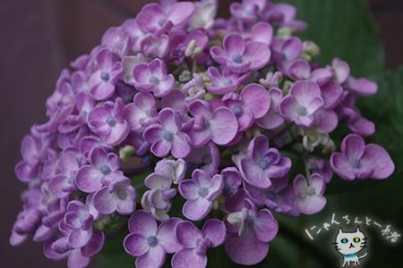 ミニ薔薇と紫陽花_e0031853_15581302.jpg