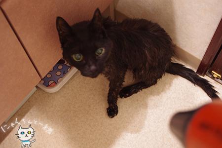 急遽、お風呂の日_e0031853_20462602.jpg